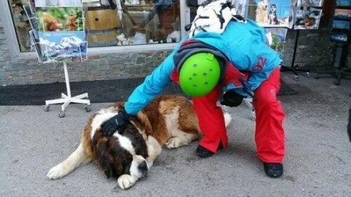Hund med person i by