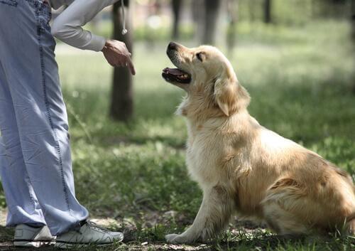 10 regler, når man træner en hund