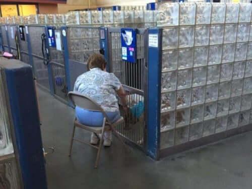 En dame læser for hjemløse hunde på internat