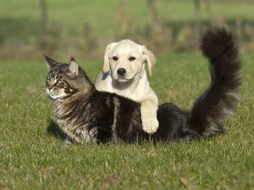 Tre trin til at behandle brandsår hos dyr