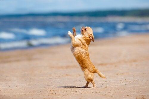 Har du hørt om dansende hunde?