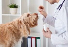 Bør jeg give en hund vitaminer?