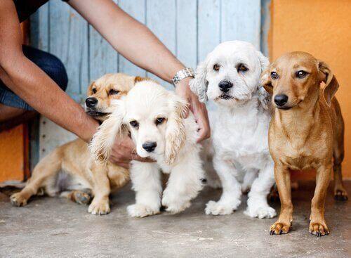 Hunde på række viser, hvordan selskab af hunde kan få en til at sige farvel til ensomhed