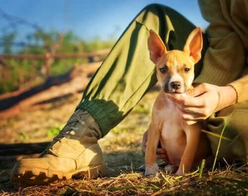 Sådan ved du, om du er en ansvarsfuld hundeejer