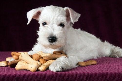 Hjemmelavede sunde snacks til hunde