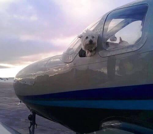 Mød 'Wings of Rescue', der redder tusindvis af hunde om året