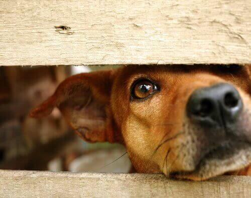 Hjælp en mishandlet hund med at stole på mennesker igen