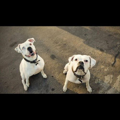 Historien om Toby, boxeren, der fandt et nyt hjem