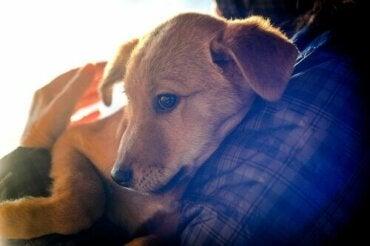 Terapi med kæledyr til indsatte i fængsler