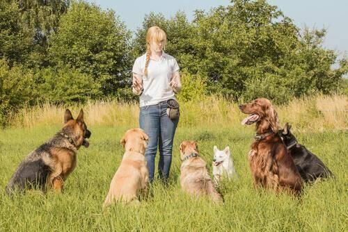 Har du hørt om online kæledyrspassere?