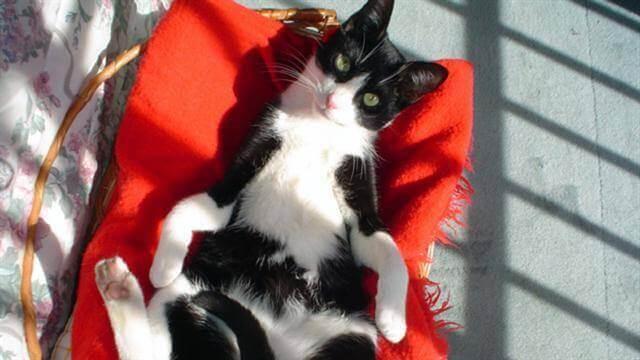En kat nyder det i sin kurv
