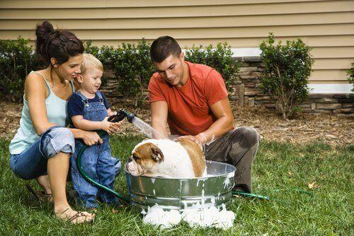 Hund får bad i haven