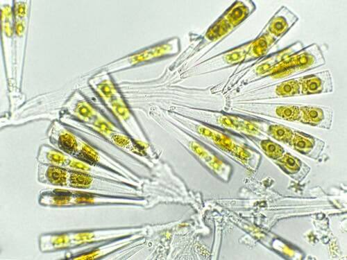 Fordelene ved planteplankton for hunde er forbundet med det høje indhold af næringsstoffer