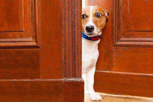 Dyrs lugtesans: Kan dyr lugte frygt?