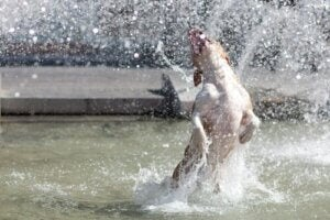 Hund hopper i vand