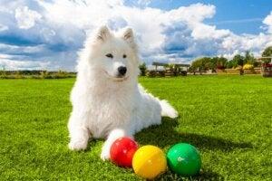 Hund med bolde