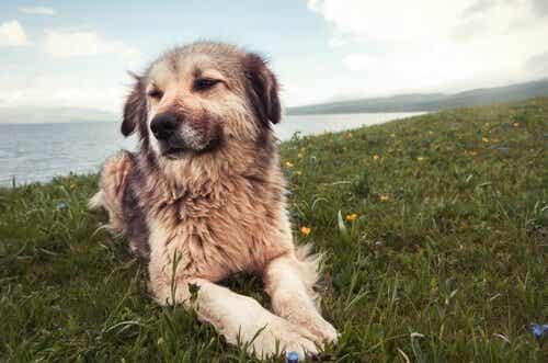 7 adfærdsproblemer hos hunde