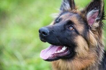 Sådan kan du forbedre din hunds selvtillid