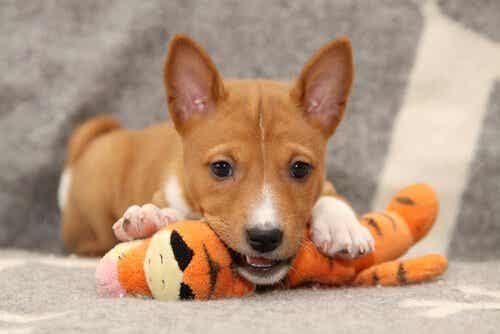 Den store debat: Har hunde brug for lykkepiller?