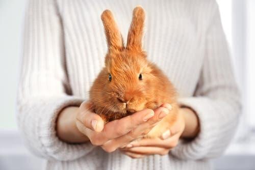 Person står med kanin i hænderne