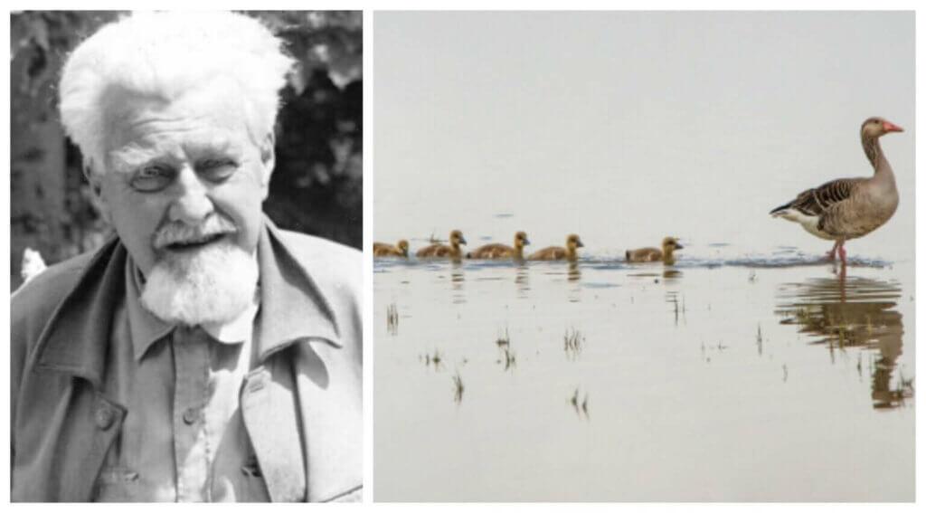 Konrad Lorenz og studiet af dyrenes adfærd