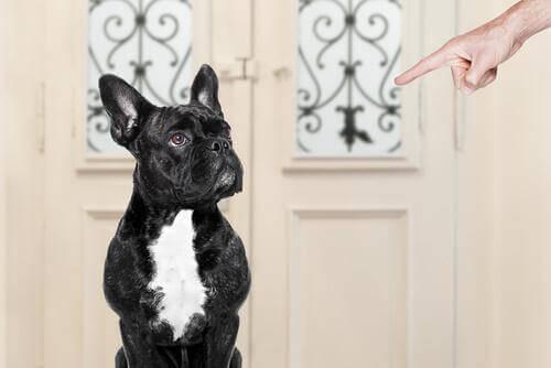 Hvad gør du forkert, når du træner en hund?