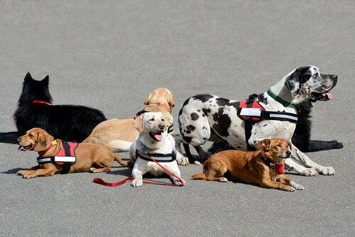 Growing Together: Terapihunde til børn