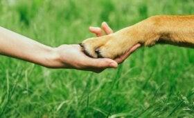 Sådan kan du vinde en hunds respekt