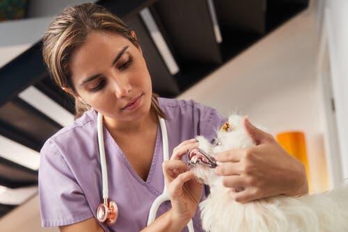 Dyrlæge tjekker for muskelkramper hos hunde