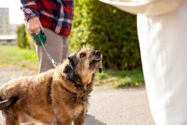 Kan det ske, at en hund er blevet skør?