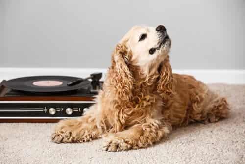 Hvordan påvirker musik forskellige dyr?