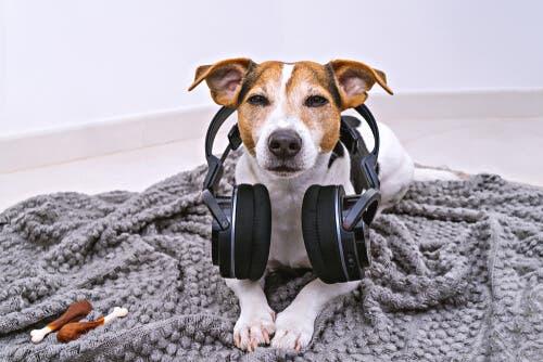 Hund med høretelefoner illustrerer, hvordan nogle vælger at lade radioen være tændt for kæledyr