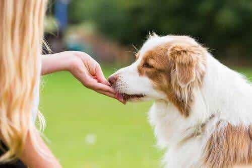 Vigtigheden af godbidder og belønninger efter en gåtur