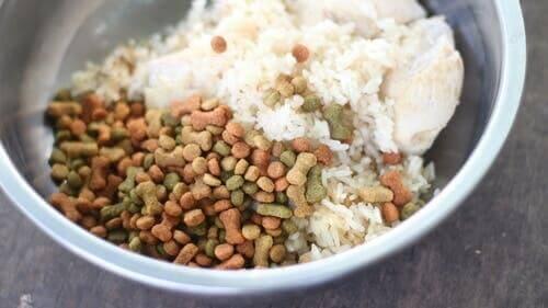 Hundeskål med ris og tørfodder