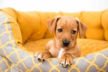At købe en hund: Risici ved at købe fra private
