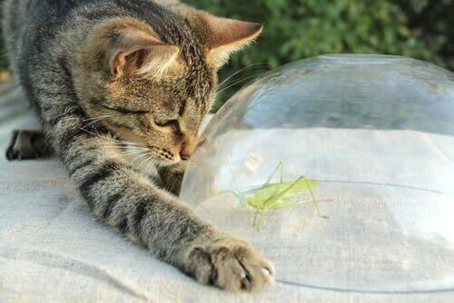 Græshoppere: Naturens violinister