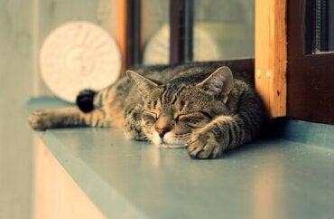 7 grunde til, at katte sover mere i løbet af dagen end om natten