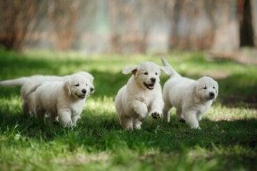 Sådan ved man, om en hund er godt socialiseret