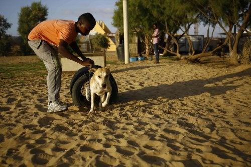 En hund leger i Gaza