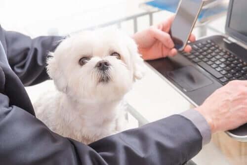 Hund ved computer er eksempel på universitetshunde