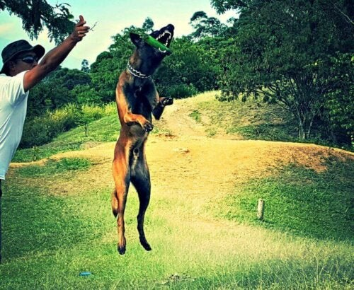 Sporhund træner