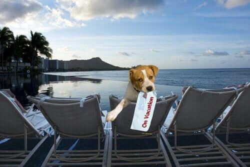 Hund på ferie, fordi ejeren ikke efterlader den derhjemme