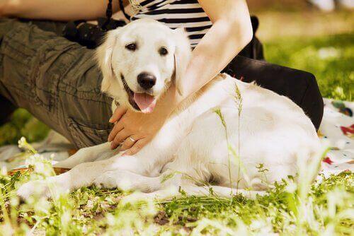 Hund på græsplæne med kvinde ved sin side