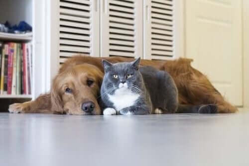 Hund og kat sammen på gulv