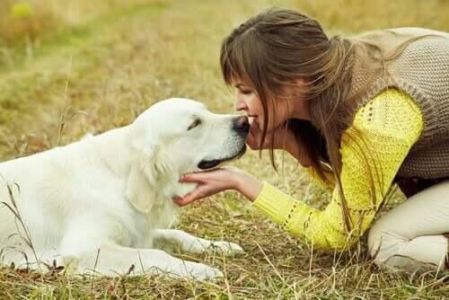 Hund kysser kvinde under huspasning