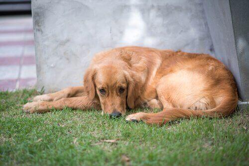 Sådan ved du, om du bør tage dit kæledyr til psykolog