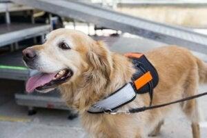 Sådan kan du stimulere en hunds intelligens