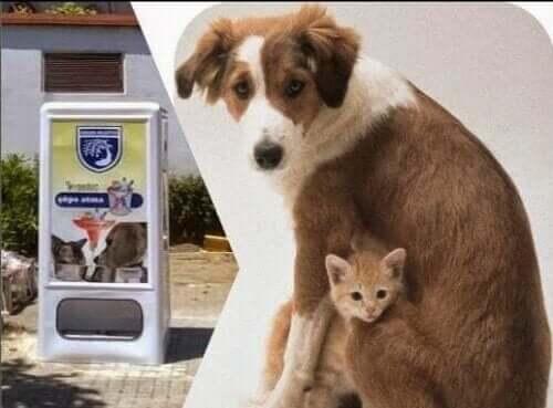Din hund kan nu få mad fra en salgsautomat med hundefoder!