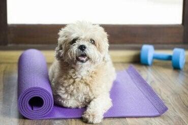 Har du hørt om fitnesscentre til hunde?