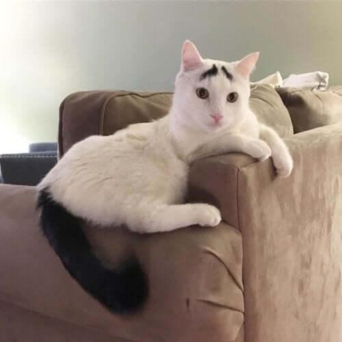 Sam er en næsten helt hvid kat, der har en sort hale og to sorte pletter over øjnene, der ligner øjenbryn